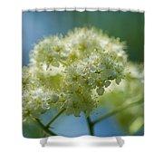 Tender Whites Shower Curtain