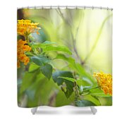 Tenderness Of Morning Shower Curtain
