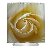 Tenderness White Rose Shower Curtain