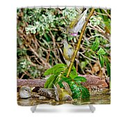 Tennessee Warblers Shower Curtain