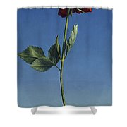 Tenuous Still-life 1 Shower Curtain by James W Johnson
