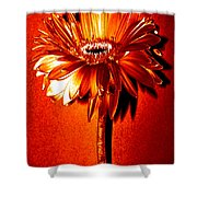 Tequila Sunrise Zinnia Shower Curtain