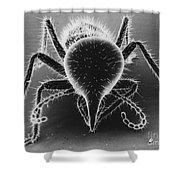 Termite Soldier Shower Curtain by David M. Phillips