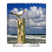 Tern On A Piling Shower Curtain