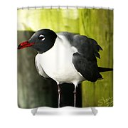 Tern Shower Curtain
