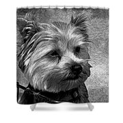 Terrier - Dog - Playing With Light Shower Curtain