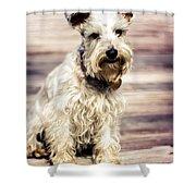 Terrier On Deck Shower Curtain