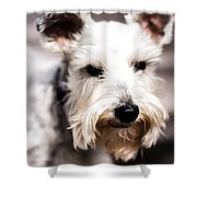 Terrier Upclose Shower Curtain