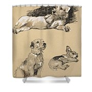 Terriers, 1930, Illustrations Shower Curtain