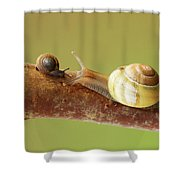 Tete A Tete Shower Curtain