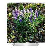 Teton Widflowers  Shower Curtain