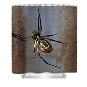 Texas Barn Spider In Web 2 Shower Curtain