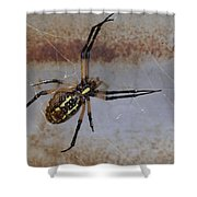 Texas Barn Spider In Web 3 Shower Curtain