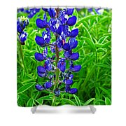 Texas Blue Bonnet Shower Curtain
