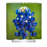 Texas Blue Shower Curtain