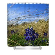 Texas Bluebonnet Center Of Attention Shower Curtain
