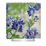 Texas Bluebonnets 01 Shower Curtain