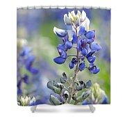 Texas Bluebonnets 04 Shower Curtain