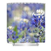 Texas Bluebonnets 05 Shower Curtain