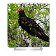 Texas Buzzard - Turkey Vulture Shower Curtain