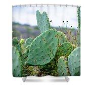 Texas Cactus Shower Curtain