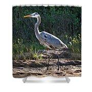 Texas Coastal Birds Shower Curtain