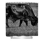Texas Longhorn IIi Shower Curtain