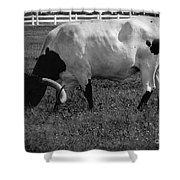 Texas Longhorn Iv Shower Curtain