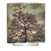 Texas Oak Tree Shower Curtain