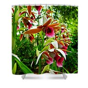 Texas Orchids Shower Curtain