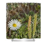 Texas Wildflowers V5 Shower Curtain