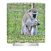 Texting Monkey Shower Curtain