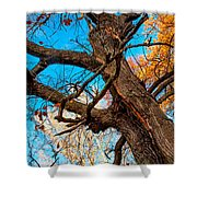 Texture Of The Bark. Old Oak Tree Shower Curtain