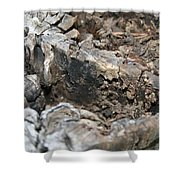 Textured Tree Stump Of Eucalyptus Tree  Shower Curtain