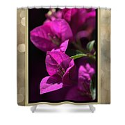Thank You - Bougainvillea Flowers Shower Curtain