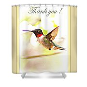 Thank You Card - Bird - Hummingbird Shower Curtain