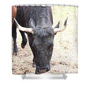 That Ain't No Bull Shower Curtain