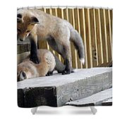 That's Not Helping - Two Fox Kits Shower Curtain