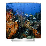 The Active Reef Shower Curtain