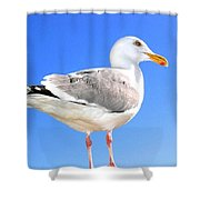 The Admiral 2  Shower Curtain