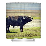 The African Buffalo. Ngorongoro In Tanzania. Shower Curtain