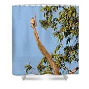 The American Kestrel Shower Curtain