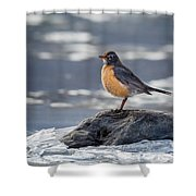 The American Robin Square Shower Curtain