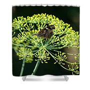 The American Snout Butterfly Shower Curtain
