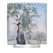 The Ancient Gum Tree Shower Curtain