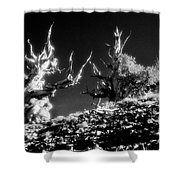 The Ancients - 1001 Shower Curtain