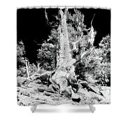 The Ancients - 1010 Shower Curtain