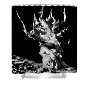 The Ancients - 1011 Shower Curtain
