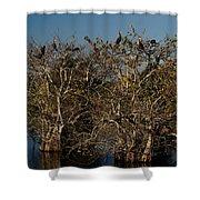 The Anhinga Trees Shower Curtain