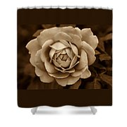 The Antique Rose Flower Shower Curtain